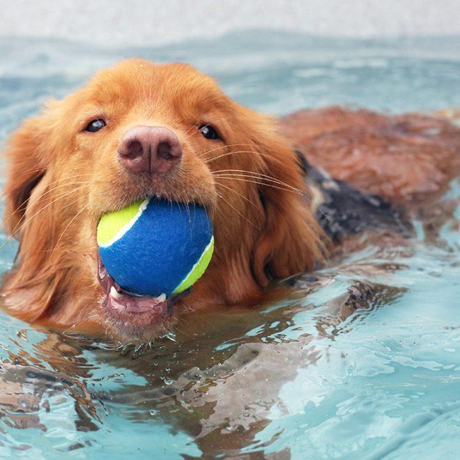 http://doggyswim4