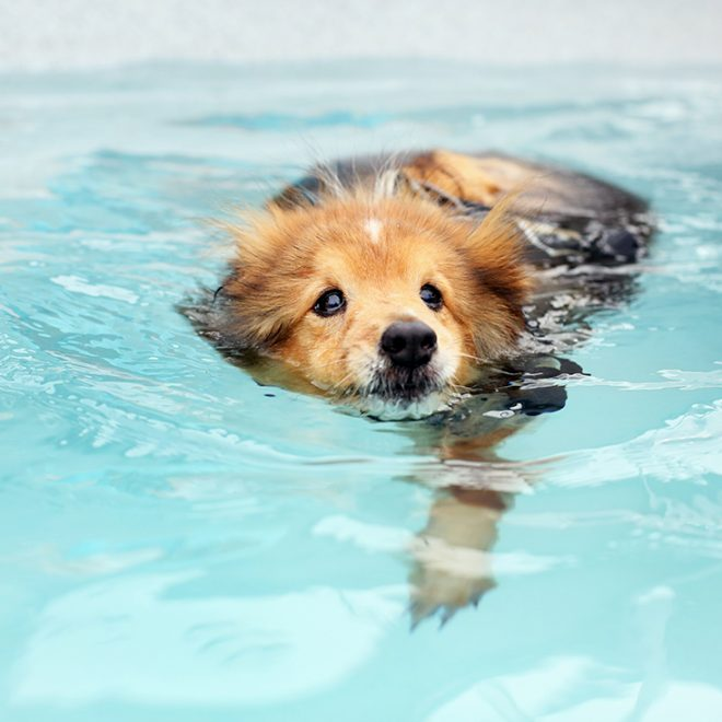 http://doggyswim5